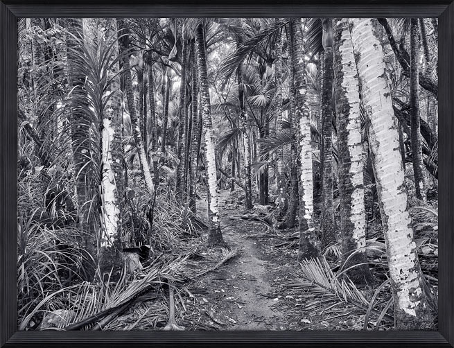 Peter Latham nz fine art photography, shades of silver, Heaphy Track