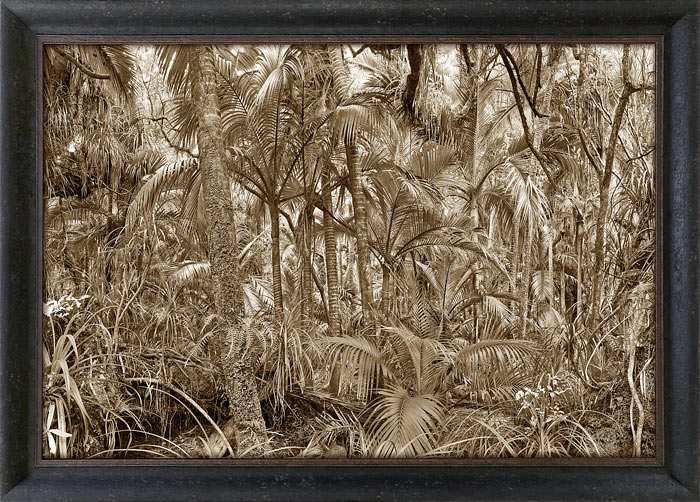 Peter Latham nz fine art photography, Heaphy, tropical tones