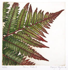 mary taylor nz fern etching