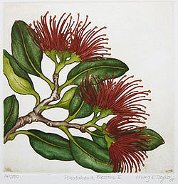 Mary Taylor NZ printmaker